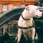 Assurances pour animaux de compagnie